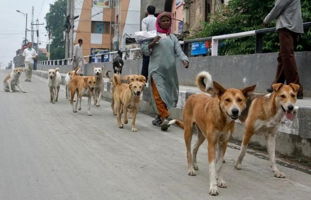 Police Dog Adoption India