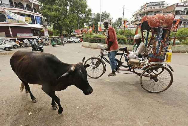 UP: Cattle smuggling, slaughter to be punishable under NSA
