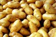 Uttar Pradesh Farmers Distribute Potatoes For Free In Delhi In Protest Against Falling Prices Of Vegetables