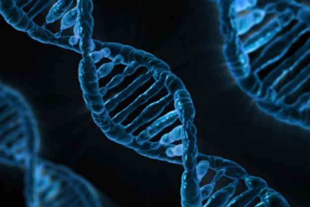Process To Bring In Human DNA Profiling Bill Has Begun: Government Tells Supreme Court