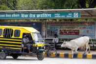 New Beef Ban Rules And Cow Protection Vigilantes, Both On Supreme Court Menu