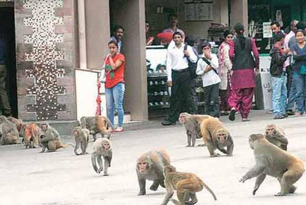 Monkeys stone 72-year-old man to death in India