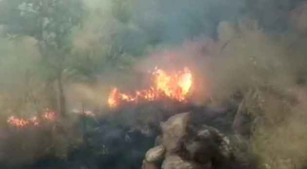 Tamil Nadu: 9 Dead, 27 Rescued After Massive Forest Fire Breaks Out In Kurangani Hills