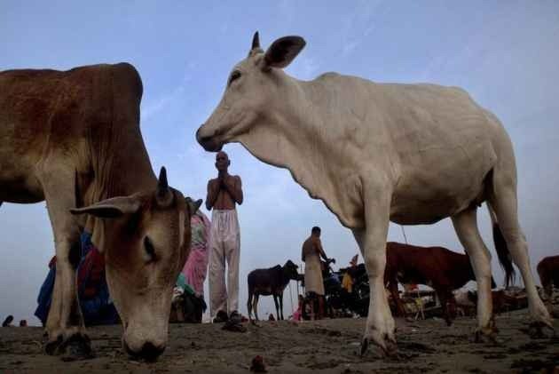 Madhya Pradesh Villagers Tonsure Heads Of Three Men Accused Of Killing Cow