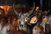 RSS-Backed Lab To Sell Cow Urine-Dung Soaps, Modi, Yogi Kurtas On Amazon