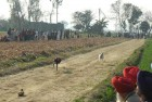 <b>Fast forward</b> A greyhound race in progress at Kotli Raiyyan, Hoshiarpur