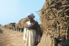 A sugarcane farmer in Baghpat, Uttar Pradesh