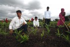 <b>Bumper crop</b> Santosh Jadav and his brothers on the ginger plantation at their farm