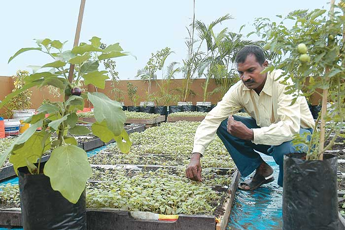 Outlook india photogallery urban india for Terrace farming in india