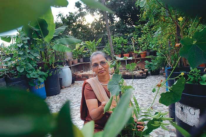 Outlook india photogallery urban india for Terrace kitchen garden india