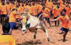 Centre Clears Jallikattu Ordinance, Prevention Of Cruelty to Animals Act Not To Be Applied To Bulls