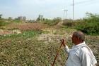 <b>Lost cause</b> Mahavir Singh surveys the vegetation-clogged canal near his home