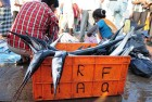 The daily catch is in at the Mangalore docks