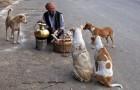 Kerala Steps up Measures to Check Stray Dog Menace