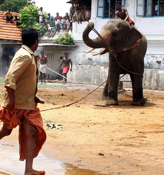 A Mammoth Problem