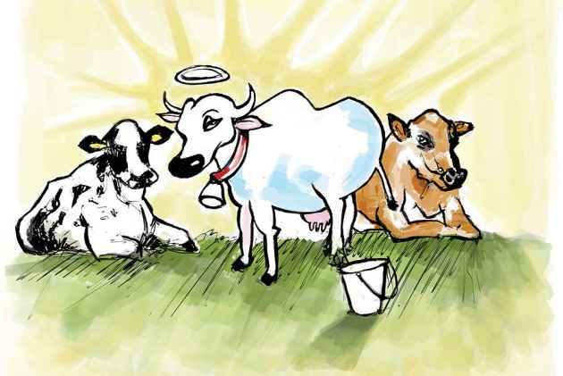 Nobody Beats Indian Cows