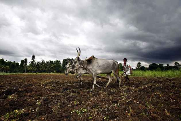 'Corporations Bleeding Rural India, Killing Our Farmers'