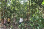 Tribal Ministry to Focus on Forest Rights Law Implementation in 2017
