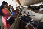 BJP Worker Killed by Gau Rakshaks in Karnataka, 17 Held