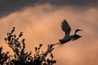 Migratory Birds Under Threat After Bird Flu Scare