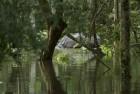 Assam Floods: Adult Rhino Carcass Found in Kaziranga National Park