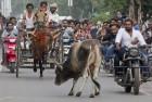 Cow Vigilantism: Bajrang Dal Activists Thrash 4 Persons in UP