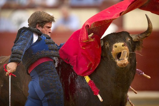 pro bullfighting essay Is bullfighting a noble, historic tradition that should be preserved, or an archaic, violent sport that must be banned which side are you on.