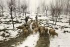 Air, Road Traffic Resumes In Snow-Hit Kashmir