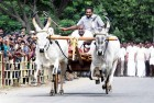 Karnataka AIADMK Backs Kambala, Wants Ban On PETA