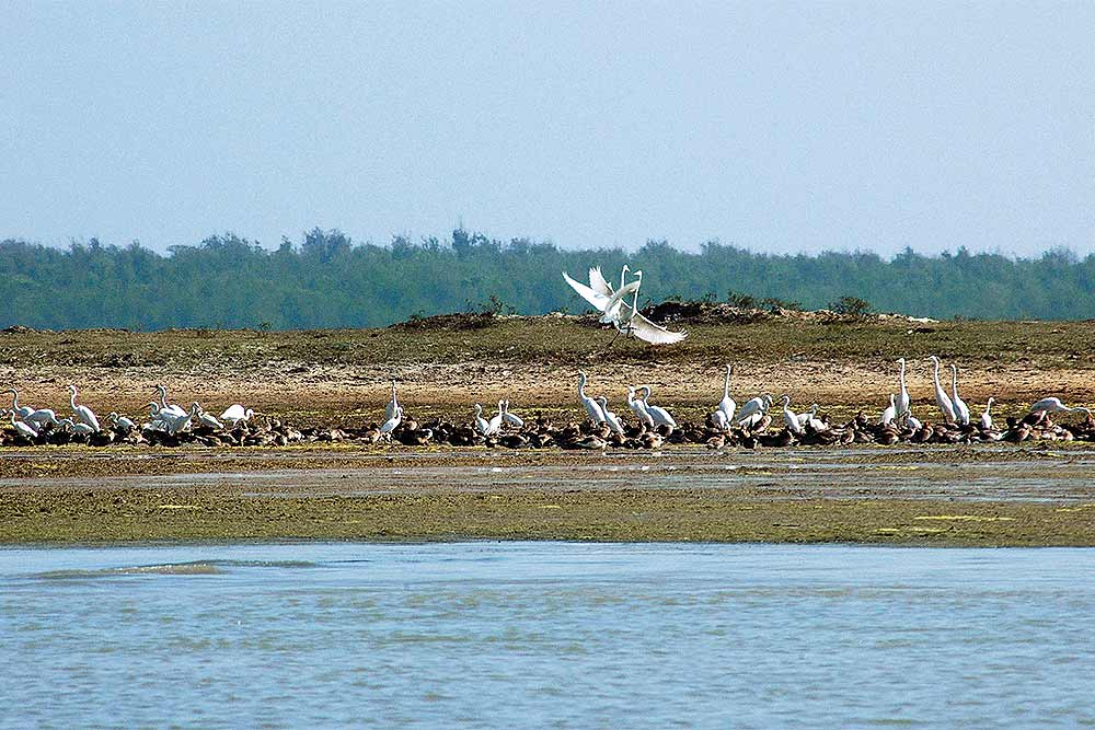 Aerodrome Project On Chilika Lake Sparks Ecological Fears