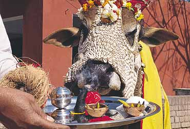 Kamadhenu Sutra