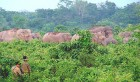 No pushing: Forest guards drive back a jumbo herd in the Kalabari forest, Panighata range, on the Indian side of the border