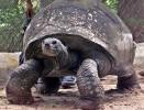 Adwaitya in Calcutta Zoo