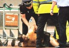 Securitymen pin down one of the Glasgow bombers minutes after his flaming jeep slammed into the airport building