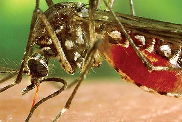 The Aedes Of September