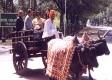 Seeking the past: Naipaul and Nadira on a bullock cart in Khajuraho