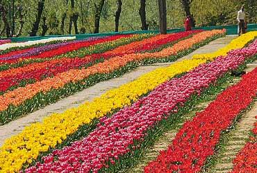 Garden Of Miasma