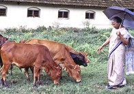 A Pastoral Elegy