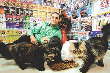 Persian cat buy mumbai