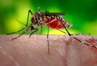 Death Caused Due To Mosquito Bite Is An accident, Says Redressal Commission