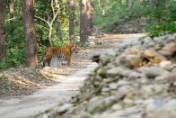 Corbett Director Replaced After Shoot-At-Sight Order For Poachers