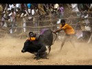 Centre Says All Prepared To Allow Jallikattu, But Will Wait For SC Order