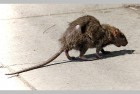 Nine Children At Delhi Government School Fall Ill After Dead Rat Found In Mid-Day Meal