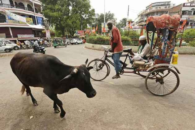 Punjab: Two Booked After Injuring Cow In Road Accident