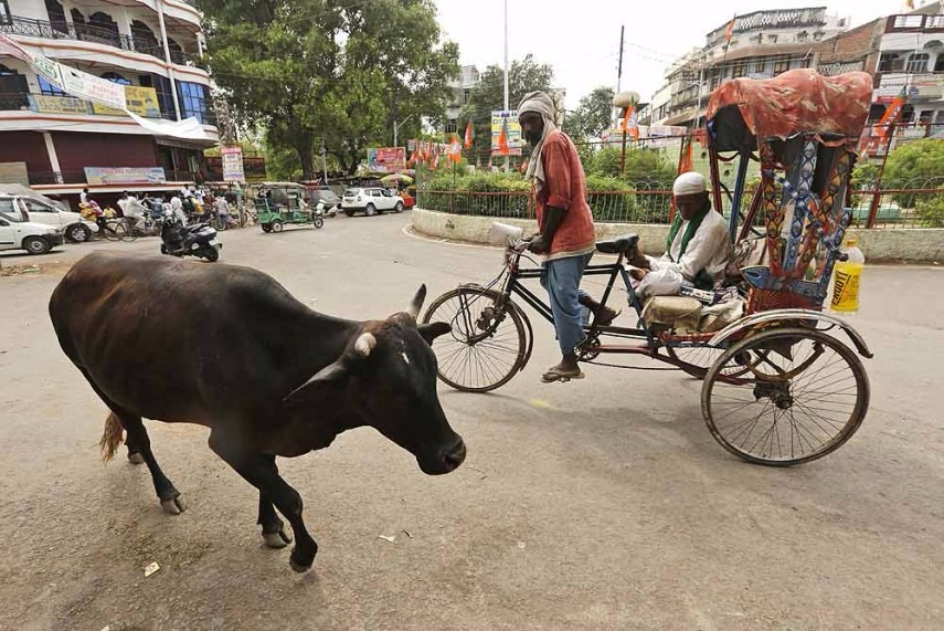 Man Thrashed in Jharkhand, House Set Ablaze After Dead Cow Found