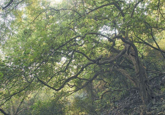 Sunderbans Mangrove Trees Losing Capacity to Absorb CO2: Study