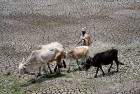 'Review Measures to Handle Possible Monsoon Failure,'  Agriculture Minister to CMs