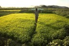 Government Waives Rs 660.50 Crore Interest On Crop Loans For November And December