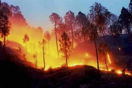 'Catastrophe' Declared As Wildfires Rage In Central Chile