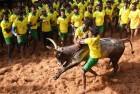 Two Spectators Die, 80 Injured In Jallikattu Event